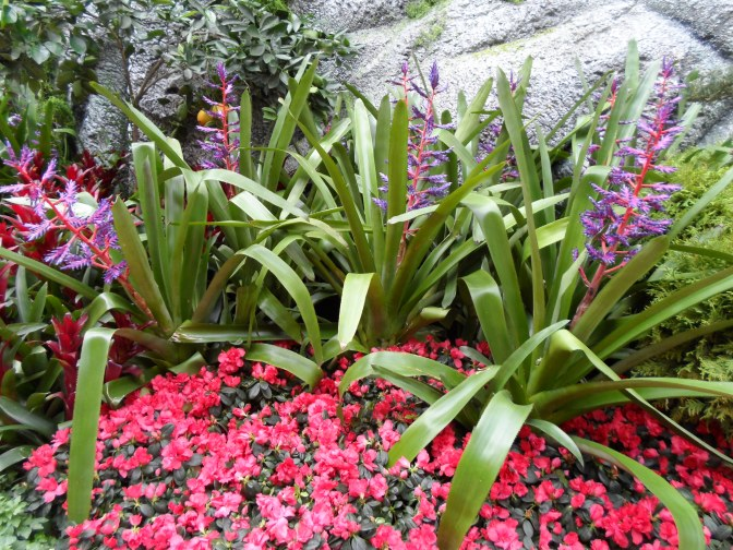 A Visit To The Bellagio Conservatory & Botanical Gardens