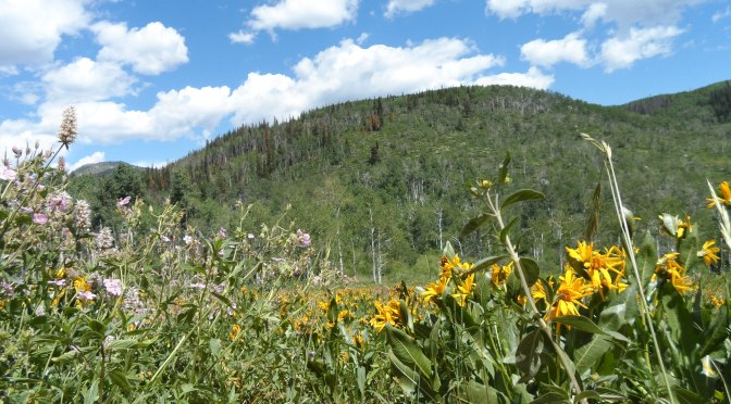 Vacationing The Summer Away In Steamboat Springs, Colorado