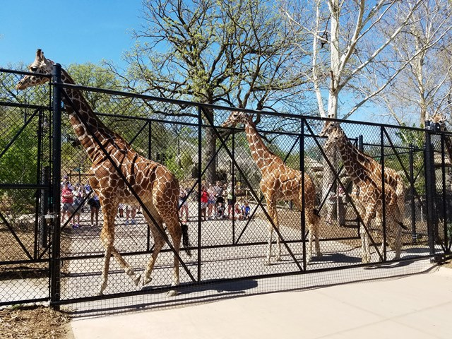 Let's All Go To The Zoo!